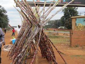 Roadside sugar cane
