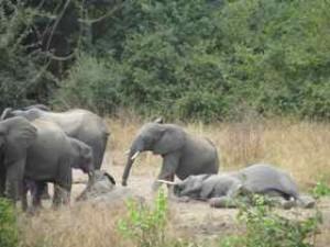 sleeping baby elephants