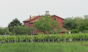 Farm on Sant'erasmo