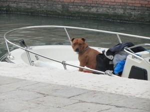 Doggie driveby