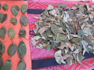 Coca leaves for religious offering